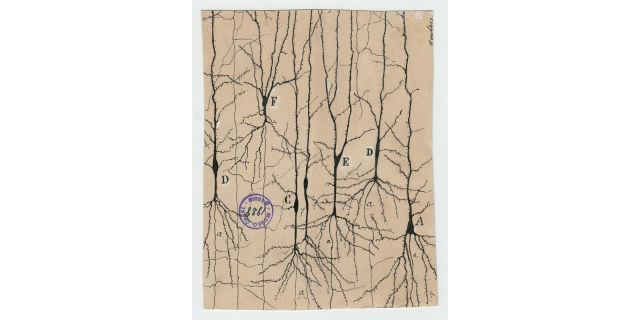the beautiful brain the drawings of santiago ramon y cajal
